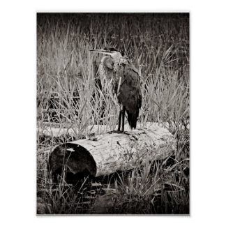 Blue Heron Photograph - Black and White Poster