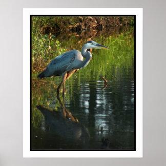 Blue Heron Poster Print