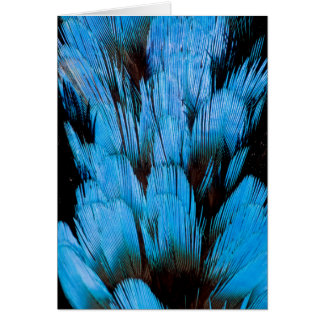 Blue Hooded Pita Feather Abstract Card