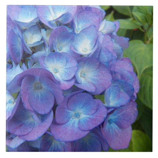 Blue Hydrangea Blossoms Floral Large Square Tile