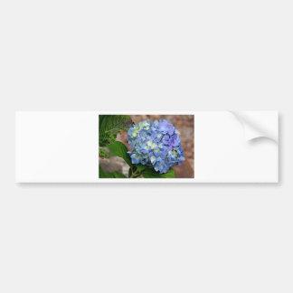 Blue Hydrangea flower in bloom Bumper Stickers