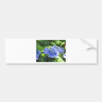 Blue Hydrangea flowers (Hydrangea macrophylla) Bumper Sticker