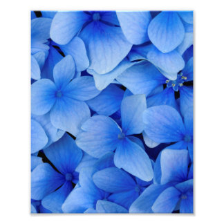 Blue Hydrangea Flowers Photo Print