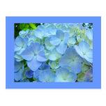 Blue Hydrangea Flowers postcards Floral Hydrangeas