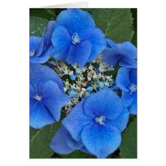 Blue Hydrangea II Notecard Note Card