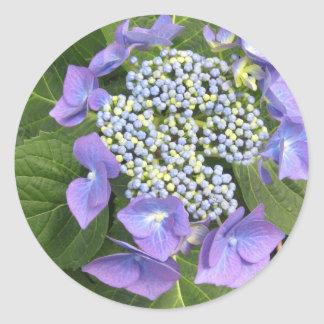 Blue Hydrangea - single head Classic Round Sticker