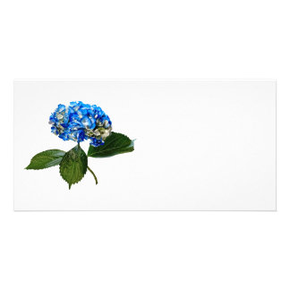 Blue Hydrangea With Leaves Custom Photo Card
