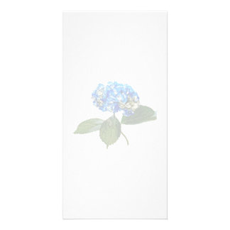 Blue Hydrangea With Leaves Photo Card