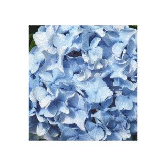Blue Hydrangeas Stretched Canvas Print