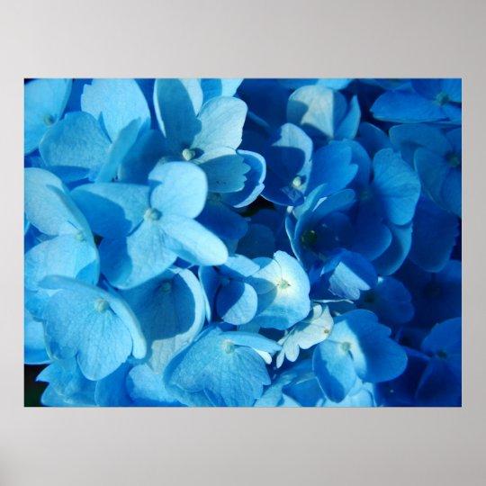 Blue Impression (hydrangea) Poster