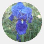 Blue Iris 5 Sticker