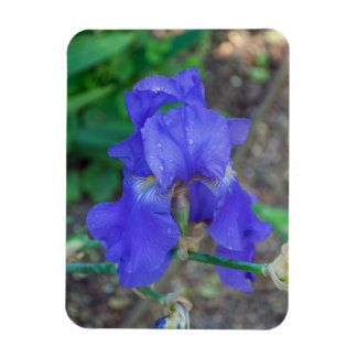 Blue iris fridge magnet