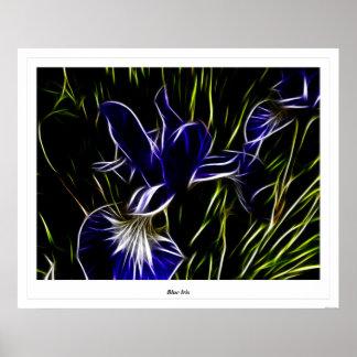 Blue Iris Print