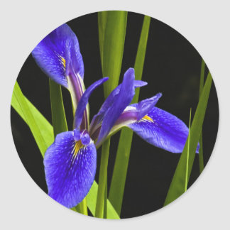 Blue Iris Sticker