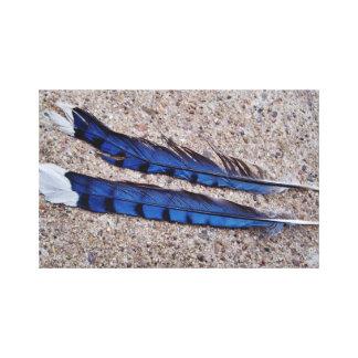 Blue Jay bird feathers Canvas Prints