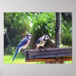 Blue Jay Birds Backyard Bird Feeder Poster Photo