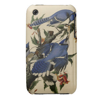 Blue Jay Case-Mate iPhone 3 Case