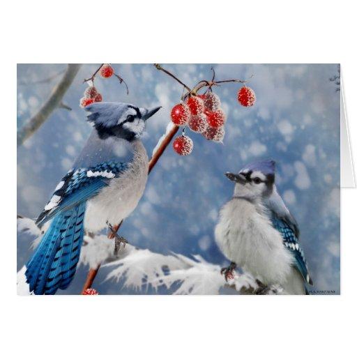 Blue Jay Christmas Greeting Card