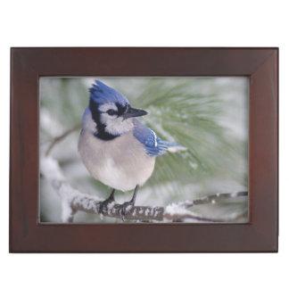 Blue Jay, Cyanocitta cristata Keepsake Box