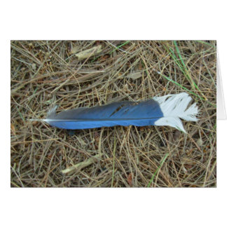 Blue Jay Feather Card