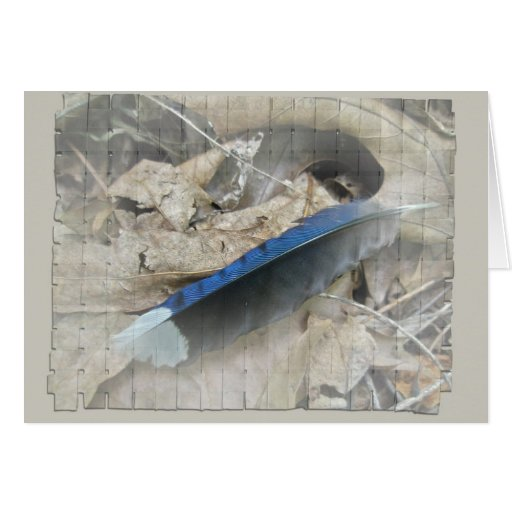 Blue Jay Feather Coordinating Items Greeting Cards