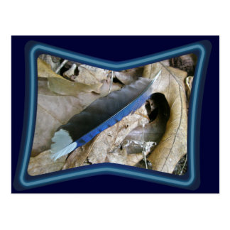 Blue Jay Feather Coordinating Items Post Card