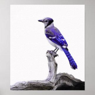 Blue Jay I Poster