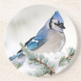 Blue Jay in Blue Atlas Cedar Coaster