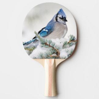 Blue Jay in Blue Atlas Cedar Ping Pong Paddle