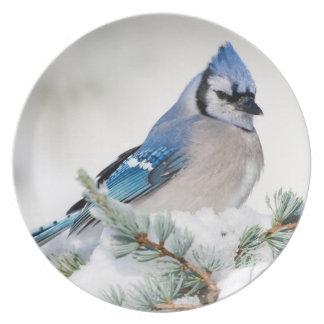 Blue Jay in Blue Atlas Cedar Plate