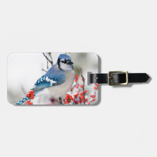 Blue Jay in Common Winterberry Bag Tag