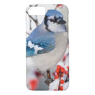 Blue Jay in Common Winterberry iPhone 8/7 Case