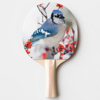Blue Jay in Common Winterberry Ping Pong Paddle