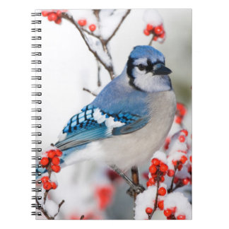 Blue Jay in Common Winterberry Spiral Notebook