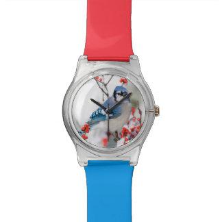 Blue Jay in Common Winterberry Watch
