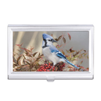 Blue Jay in Nandina Heavenly Bamboo Business Card Holder