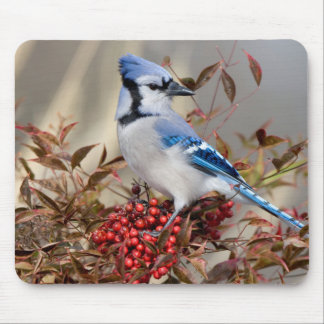 Blue Jay in Nandina Heavenly Bamboo Mouse Mat