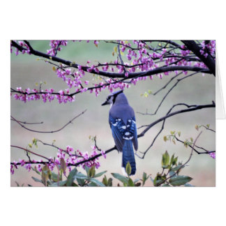 Blue Jay in Spring Card