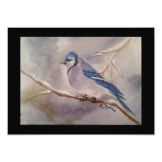 Blue Jay in Winter Photograph