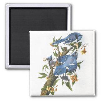 Blue Jay, John James Audubon Square Magnet