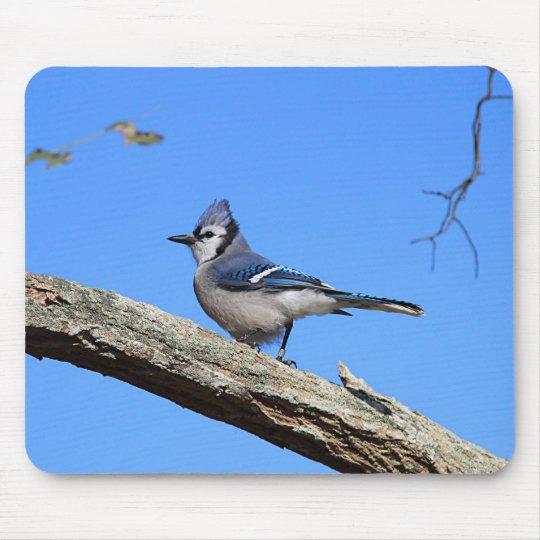 Blue Jay Mouse Mat