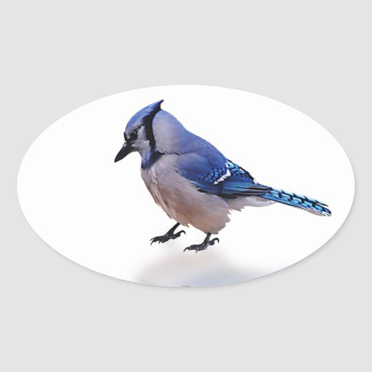 Blue Jay Oval Sticker