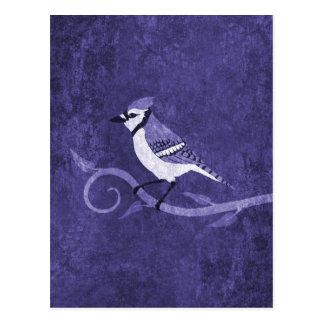 Blue Jay Postcard