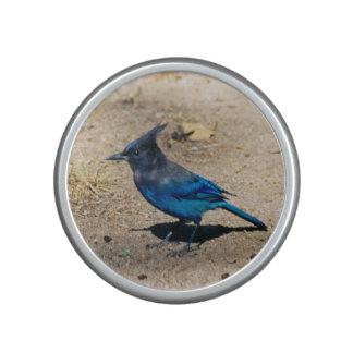 Blue Jay speaker
