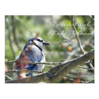 Blue Jay Spring Postcard