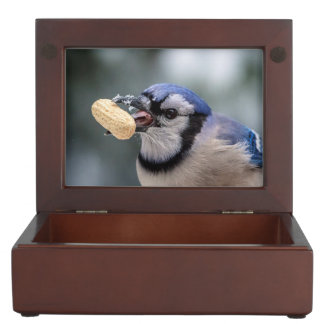 Blue jay with a peanut memory box