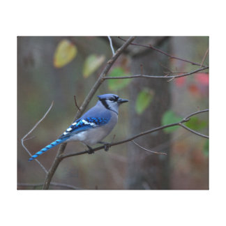 Blue Jay with Autumn Leaves background Canvas Prints