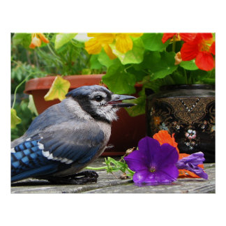 Blue Jay with Flowers Poster