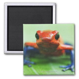 Blue Jean Frog Square Magnet
