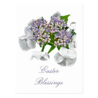 Blue Lace Hydrangea Coordinating Items Postcard